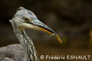 Oiseaux du Site classé de la vallée de La Brosse et de La Gondoire