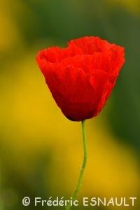 Autres fleurs du Site classé de la vallée de La Brosse et de La Gondoire