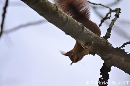 Un écureuil et des oiseaux