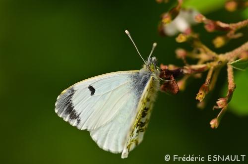 Papillon & Oiseaux