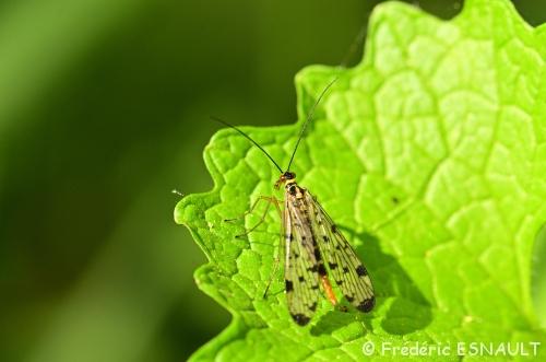 Premiers insectes du Printemps