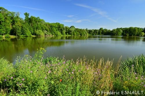 L'étang de la Loy au milieu des fleurs