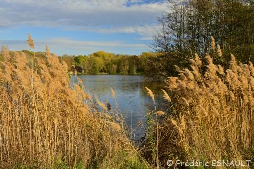 L'étang de la Broce