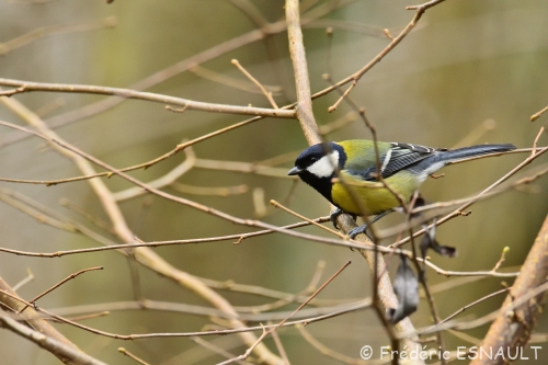 Oiseaux de la forêt