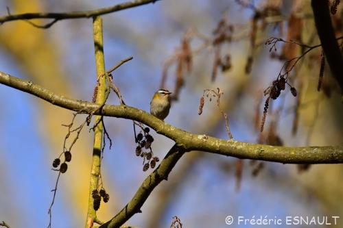 Oiseaux du jour