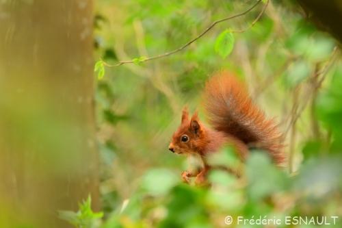 Héron, écureuil, bergeronnette
